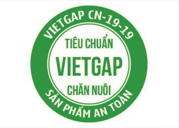 Việt Gap