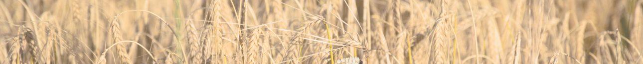 Đăng ký chứng nhận lưu hành tự do cho hàng nông sản