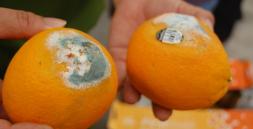 Những tác động của Vi sinh vật trong thực phẩm
